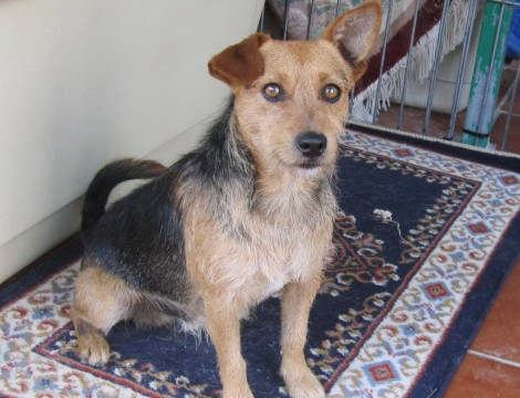 Freddie now Jack - RE-HOMED