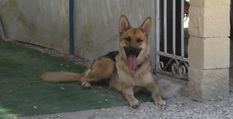 Our Super Cool LAIKA has been adopted