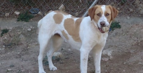 JENNY - ADOPTED -  We need a very special kind of person for Jenny.  Somebody that loves dogs.