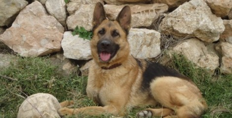 PEGGY-SUE - I´M ADOPTED - and have the perfect new family, even a sister.