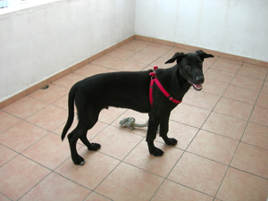 Paco - Successfully rehomed