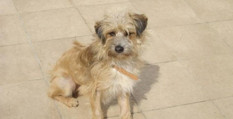 TOBY - Such a little cute´ - adopted on his way to Holland.