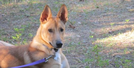 ADOPTED - ZAK - FOUND HIS FOREVER FAMILY -